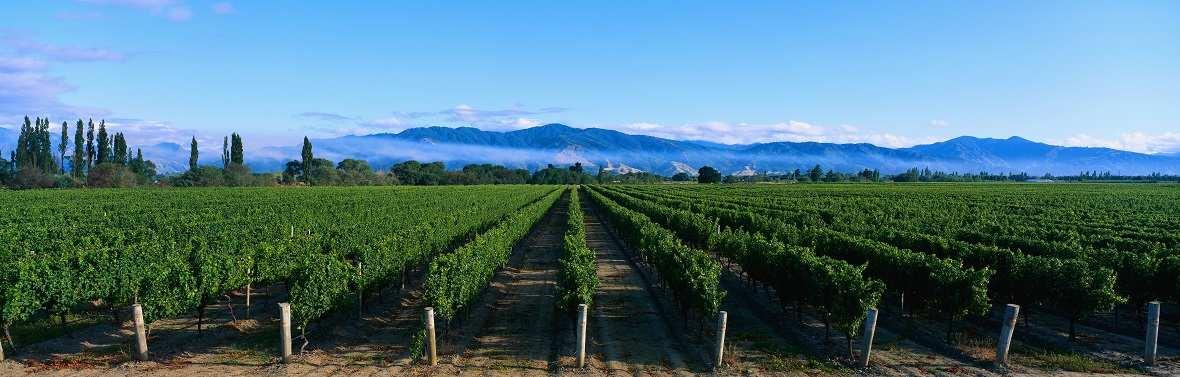 Купить виноградники купить дом в америке цена