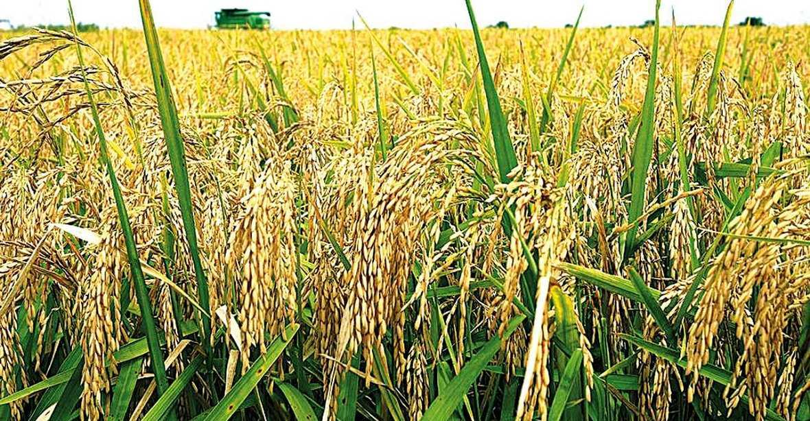 Рисовые элеваторы в краснодарском крае как сделан элеватора