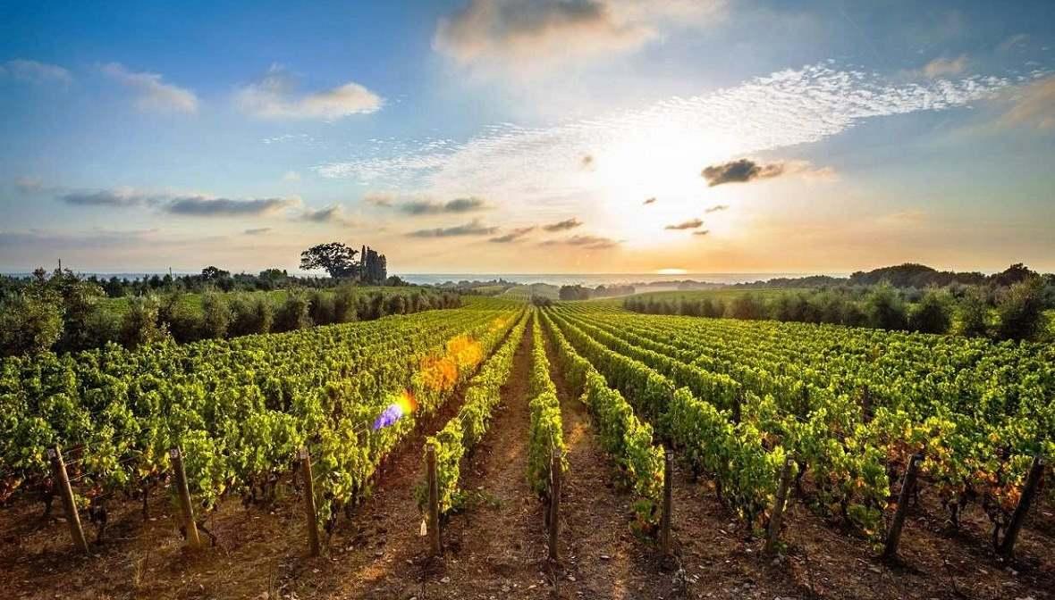 Купить виноградник транзит через дубай flydubai